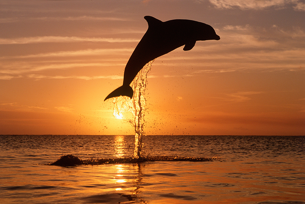 Dolphin 05_7x10print