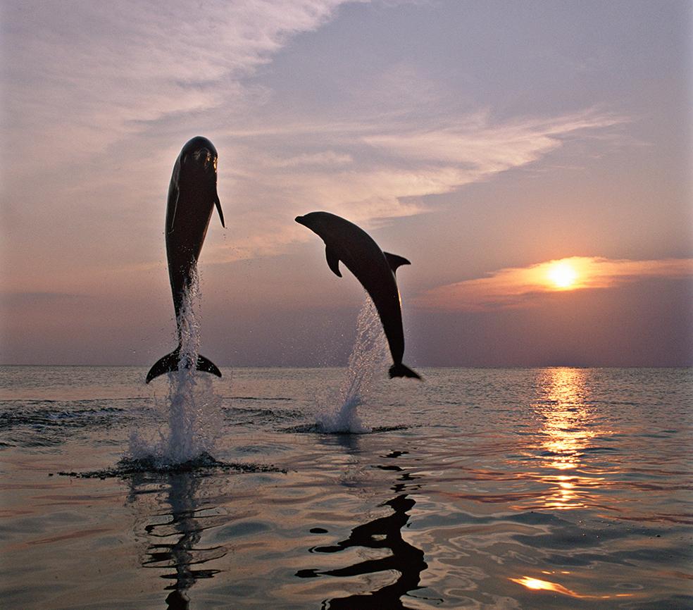 Dolphin_15_24x30print