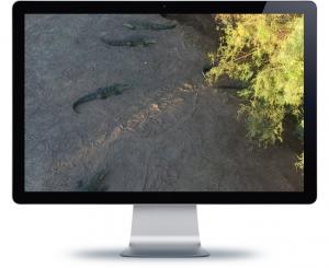 monitor DW_crocs